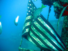fish are patriotic in Key Largo