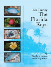 Know your fish when diving the Florida Keys